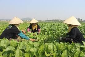 Lấy ý kến xây dựng Nghị định về Bảo hiểm nông nghiệp