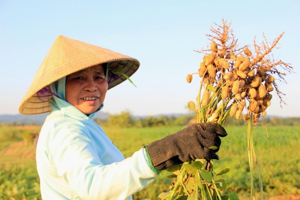 Bảo hiểm nông nghiệp: Thách thức và cơ hội