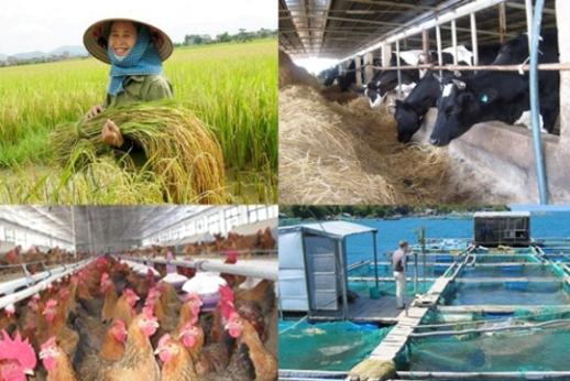 Chính sách hỗ trợ bảo hiểm nông nghiệp